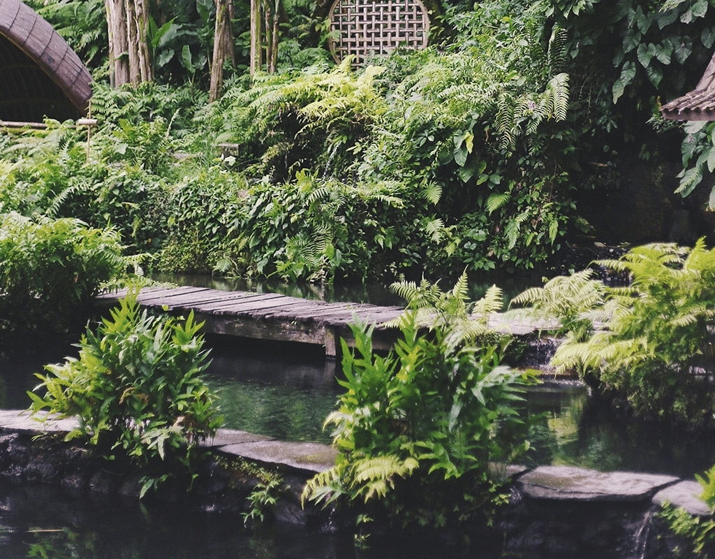 outdoor eco pool | eco pools | Peace Evolution