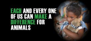 world animal day each and every one of us can make a difference for animals | Peace Evolution