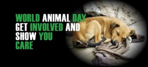 world animal day get involved and show you care | Peace Evolution