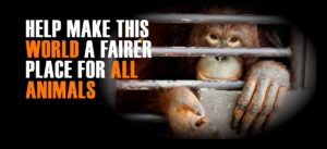 world animal day help make this world a fairer place for all animals | Peace Evolution